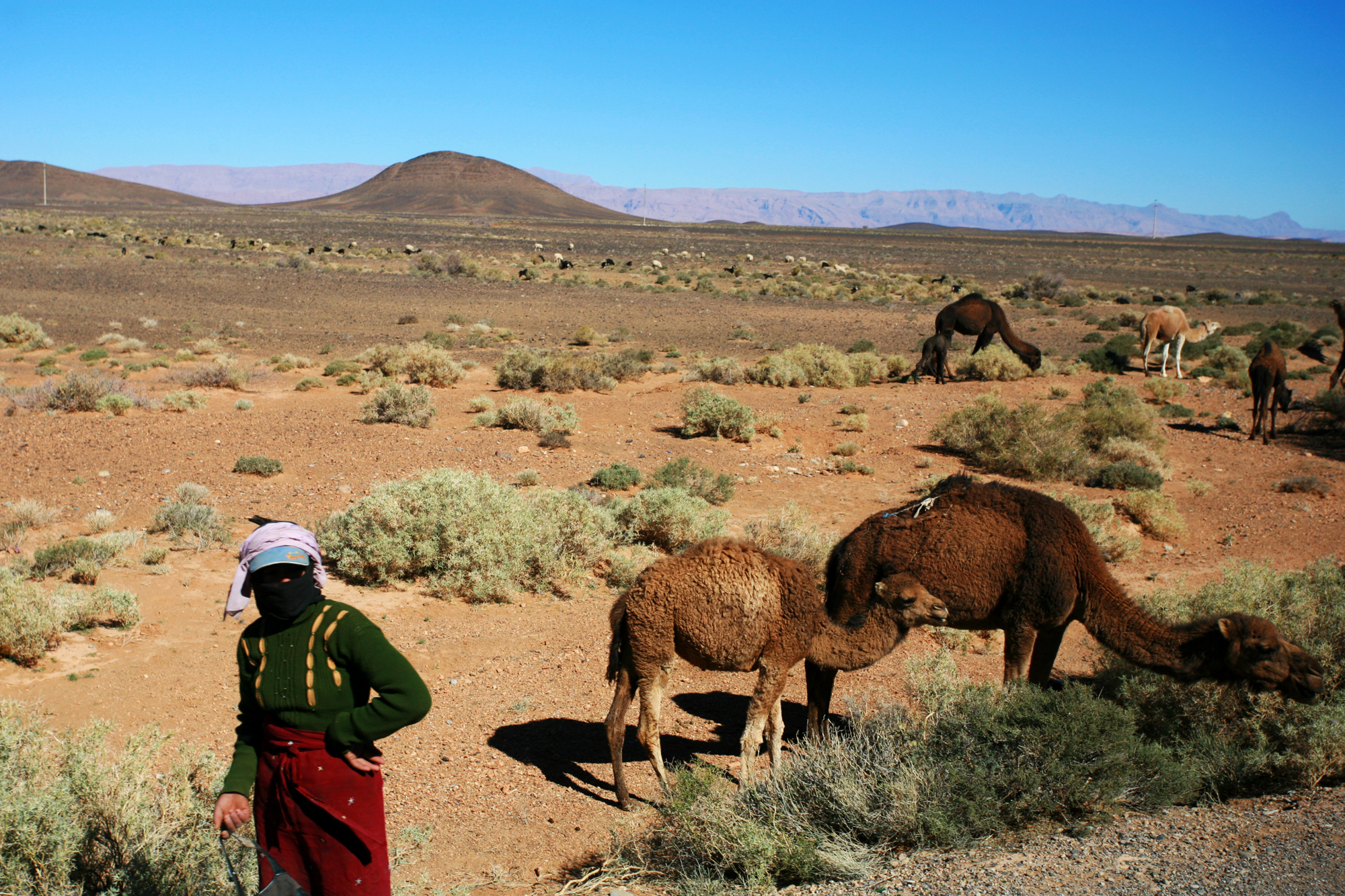 Mujer con camellos