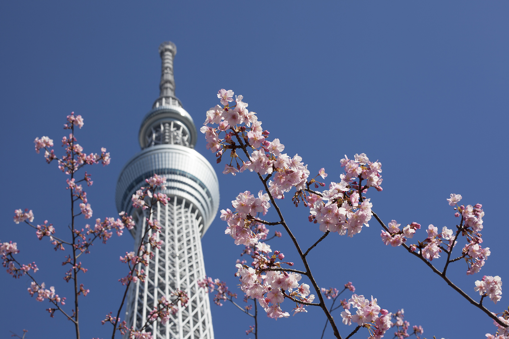 Japon 4 web